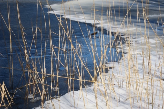 Wasser, Land, Gras