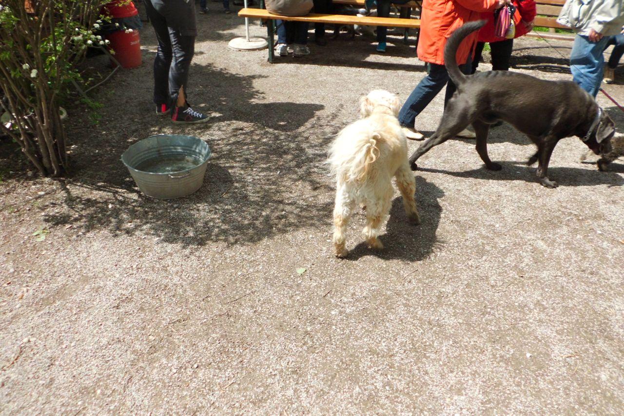 Hund in Weiß
