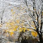 Schnee mit Farbe