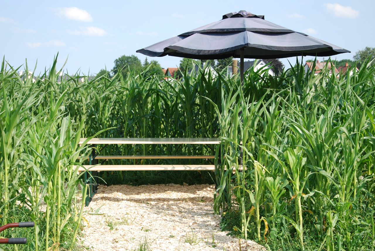 Lauschig im Mais