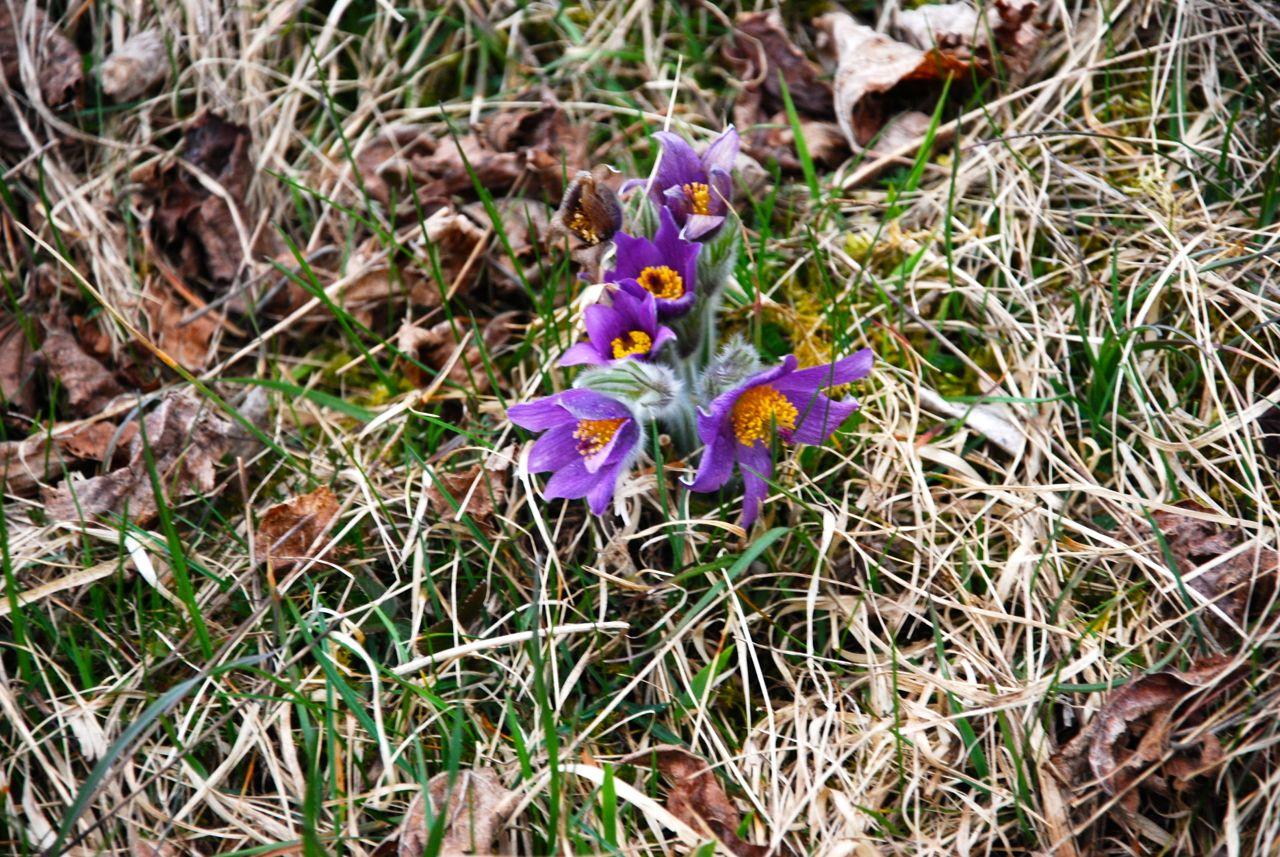 Frühling in Blau